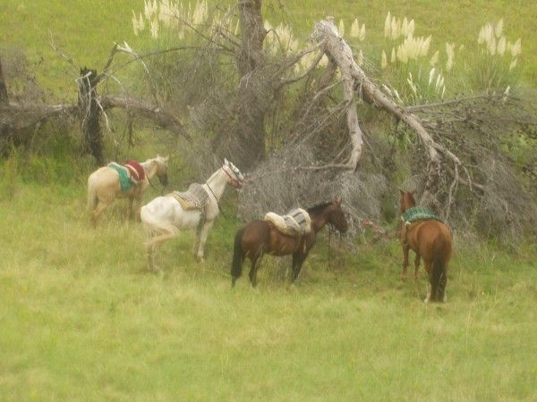 Fotolog de elestablo: Listos Para Retomar El Camino